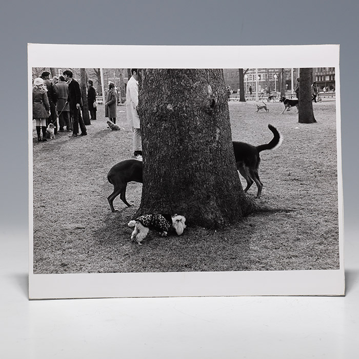 Photographic print of dogs surrounding tree