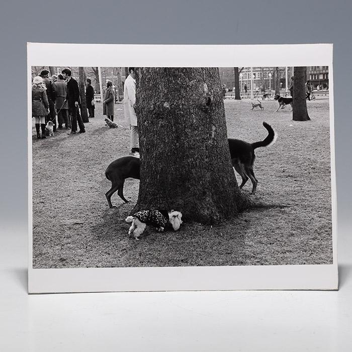 Photographic print of dogs surrounding tree